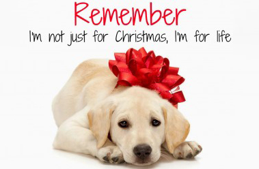 Council urges caution over dogs as gifts this Christmas