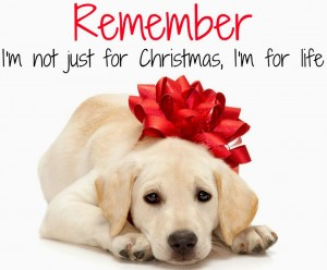Should you get a dog for Christmas?